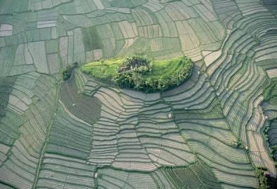 Indonesien Bali Reisterassen