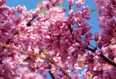 Kanada Niagara Park Blüten