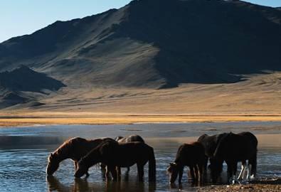 Mongolei Pferde
