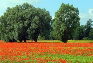 Polen Masuren Sommerwiese