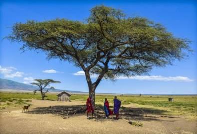 Tansania Massai unter Bäumen