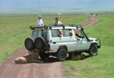 Tansania Löwen Jeep