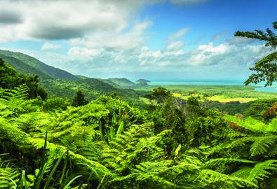 Australien Daintree Nationalpark