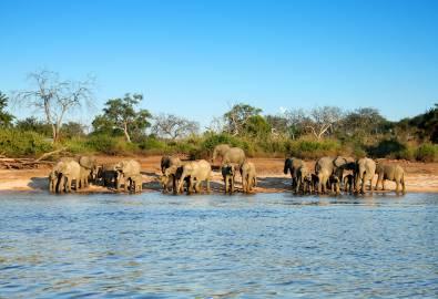 Simbabwe - Elephant herd