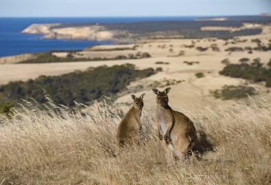 Exceptional Kangaroo Island, South Australia