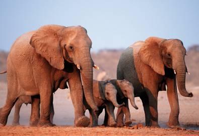 Namibia Elefanten Familie