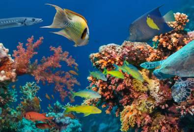 AU_QLD_Great Barrier Reef_shutterstock-431873083