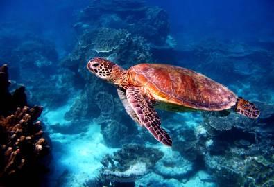 AU_Turtle_shutterstock_475341964