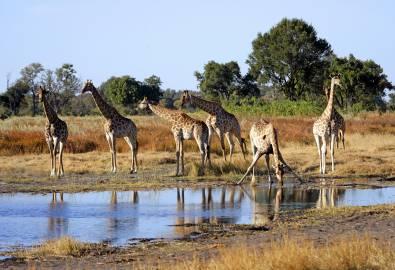 Botswana-Okavango-iStock_000003749111Large