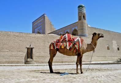 Usbekistan - Kamel