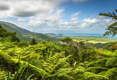 Daintree Nationalpark