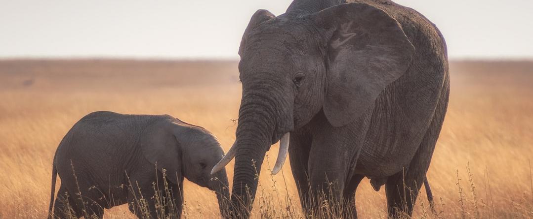 Kapama Game Reserve - Elefant mit Kind