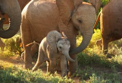 Elefanten Baby
