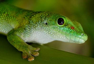 Gecko_Flickr_Header