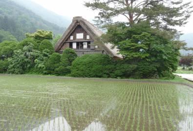 Japan Shirakawago (2)