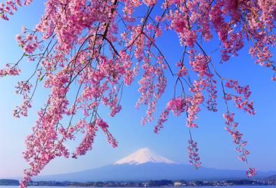 Japan - Fuji Kirschblüte