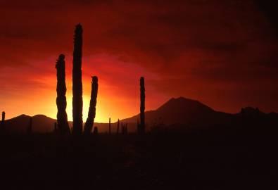 Mexiko_Kaktus