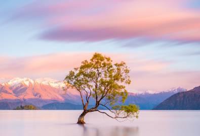 NZ_OT_WanakaTree_shutterstock-1028852335