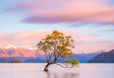 NZ_Wanaka_Tree_shutterstock_1028852335