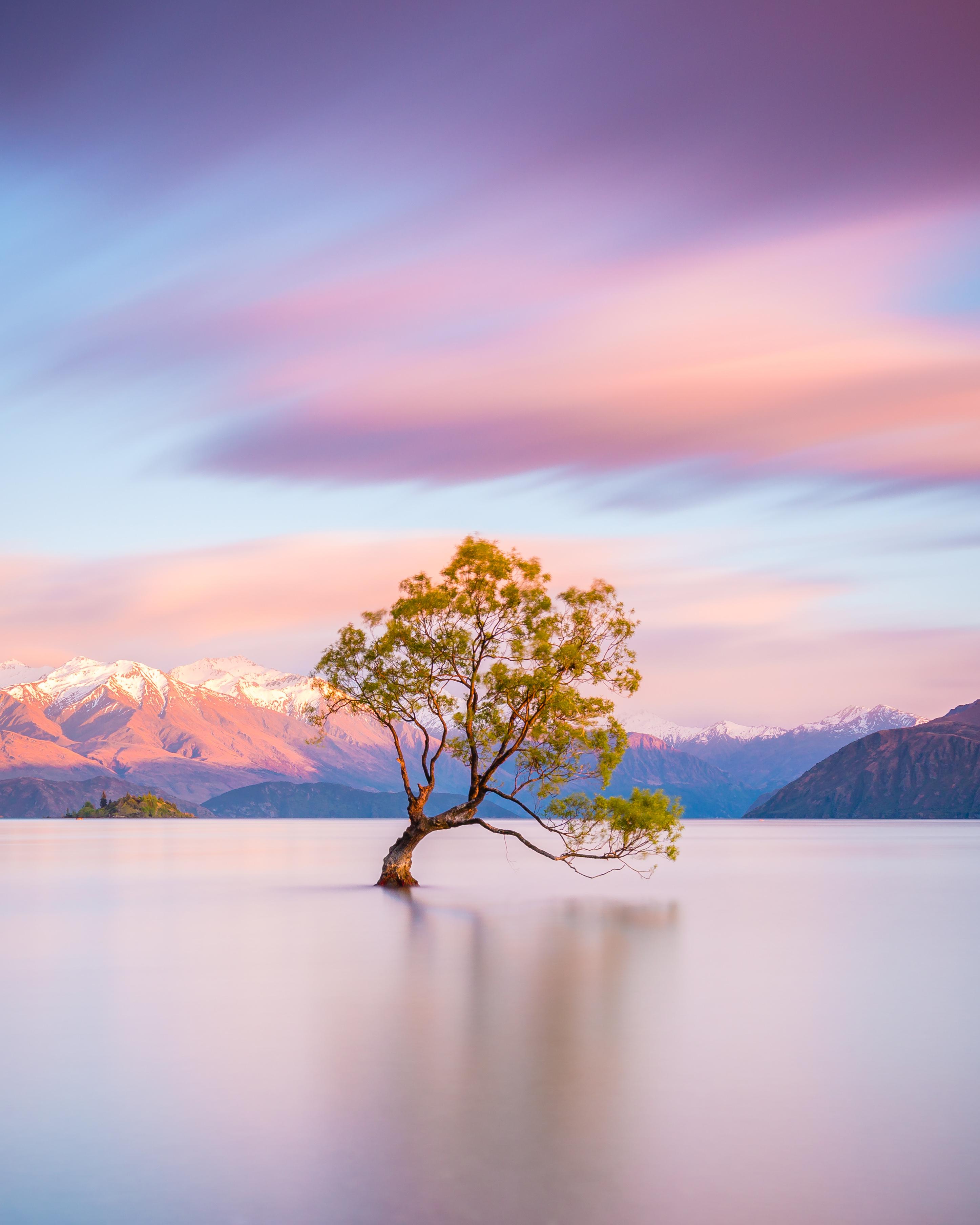 NZ_Wanaka_Tree_shutterstock_1028852335