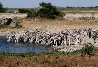 Namibia-Etosha-Wasserloch