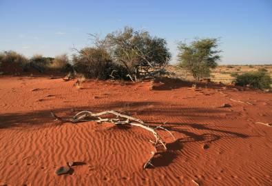Namibia-Kalahari-Wueste
