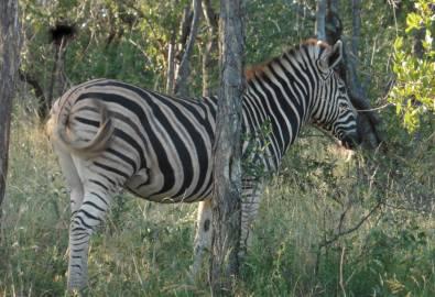 Zebra Private Game Reserve