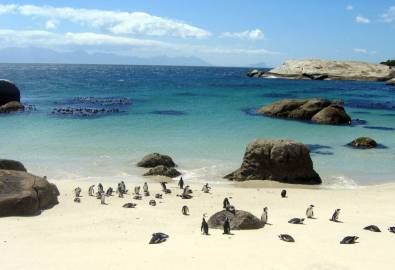 SA_Boulders Beach_Pinguine_1