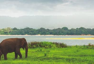 Sri Lanka - Minneriya Wildschutzgebiet