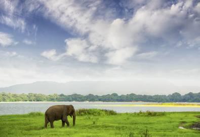 Elephant in Minneriya Wildlife Reserve, Sri Lanka