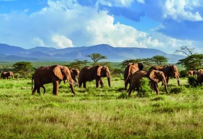 Südafrika - Elefantenherde