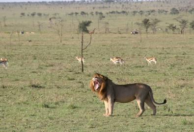Tansania 2016 148_RGB_1000px