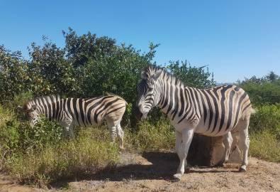 Umfolozi Nationalpark