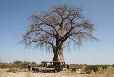 Unter dem Baobab Baum