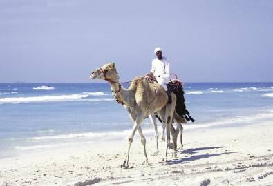 VAE Kamel mit Reiter