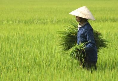 Vietnam-iStock_000004239261Large