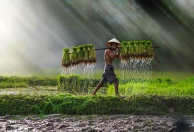 Vietnam - Bauer