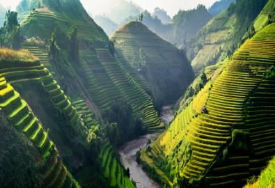 Vietnam - Reisterassen