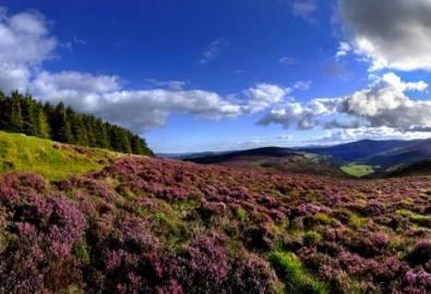 Irland - Wicklow