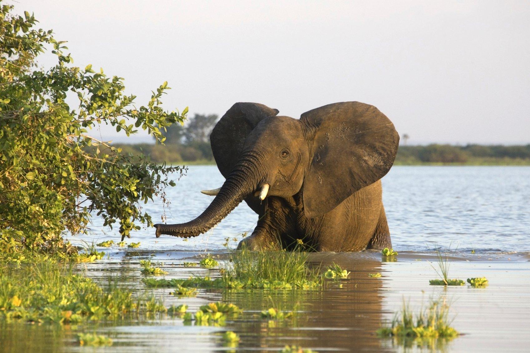 selous-game-reserve-elefant-iStock_000013402442Medium
