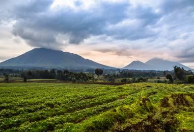 Ruanda - Virunga