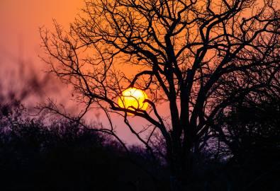 Sonnenuntergang Timbavati