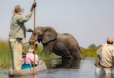 Botswana - Mekoro