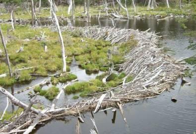 Argentinien Ushuaia abgestorbener Wald