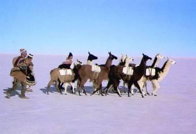 Bolivien Lamas Salar