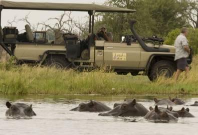 Botswana Nilpferde