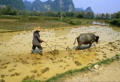 China Bauer mit Büffel