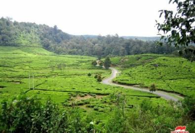Indonesien Java Teeplantagen