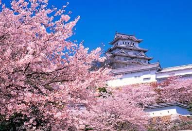 Japan Himeji Castle Spring