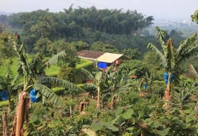 Kolumbien Kaffeeplantage